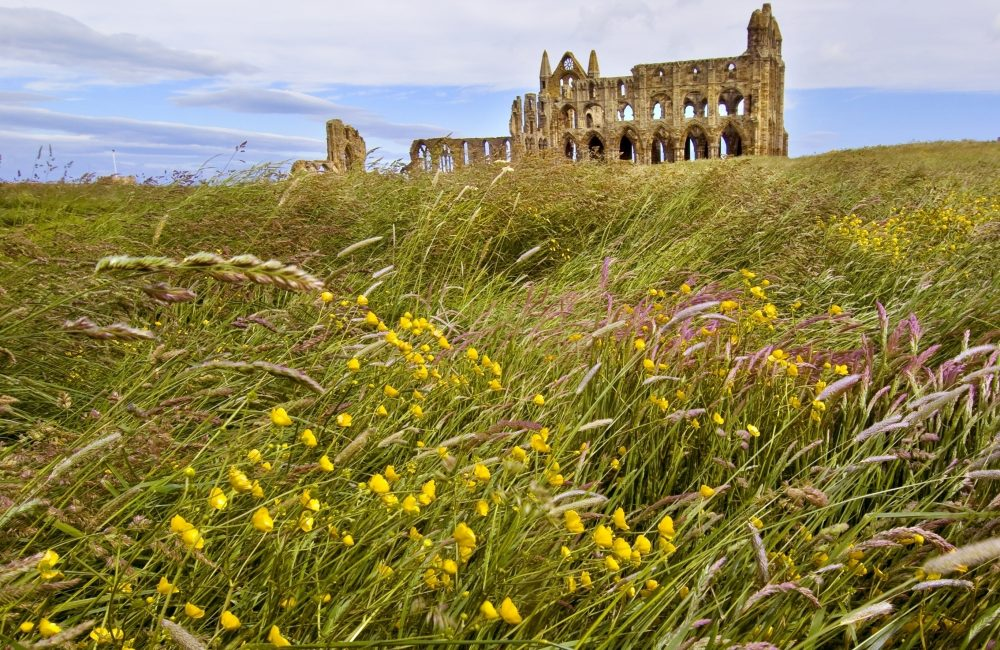 View of Whitby Abbey across the grass.